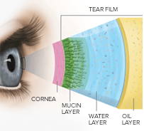 Diagram of Tear Film
