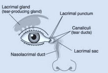 Lacrimal System Diagram.