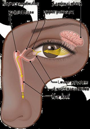 Dry Eye Anatomy and Physiology